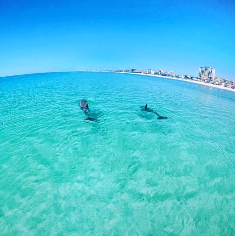 Best Dolphin Tour In Destin Fl