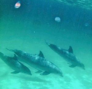 Dolphin Tour pic 2